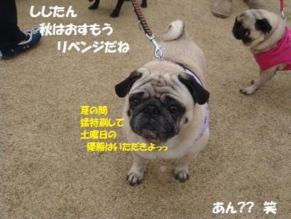 DSC04257_20111005022150.jpg
