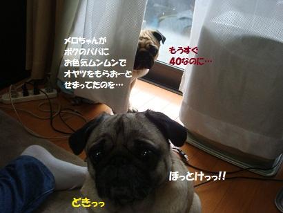 DSC04417.jpg
