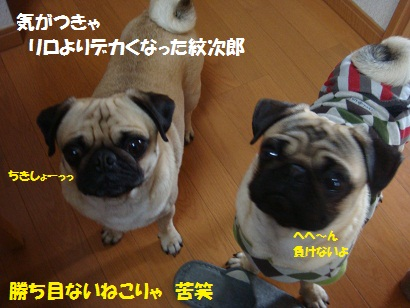 DSC04425_20111017045743.jpg