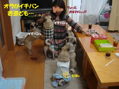 DSC04436_20111017042402.jpg