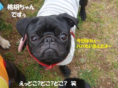 DSC04592_20111019194100.jpg