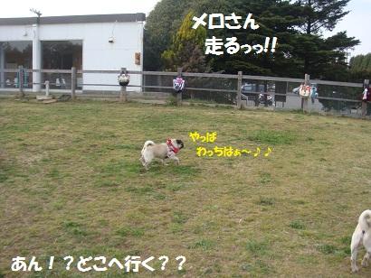 DSC04643_20111018193345.jpg