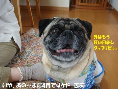 DSC04715_20111025042022.jpg