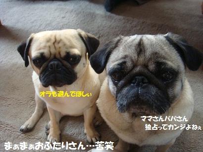 DSC04720_20111025051054.jpg