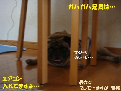 DSC04756_20111025053431.jpg
