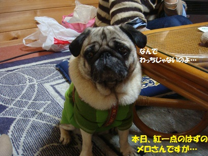 DSC04867_20111026013822.jpg