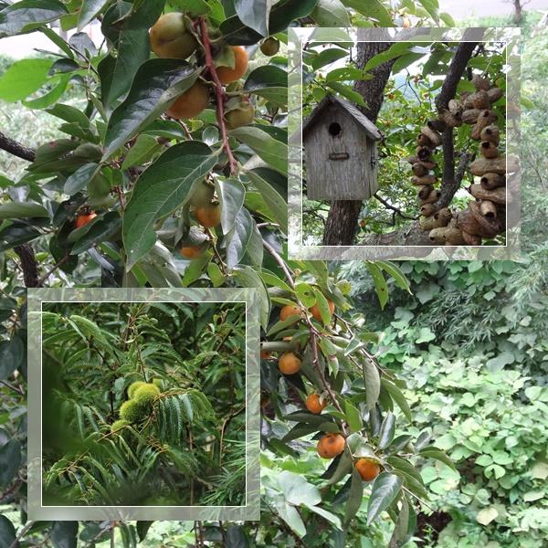 柿の木と栗の木と鳥の巣箱