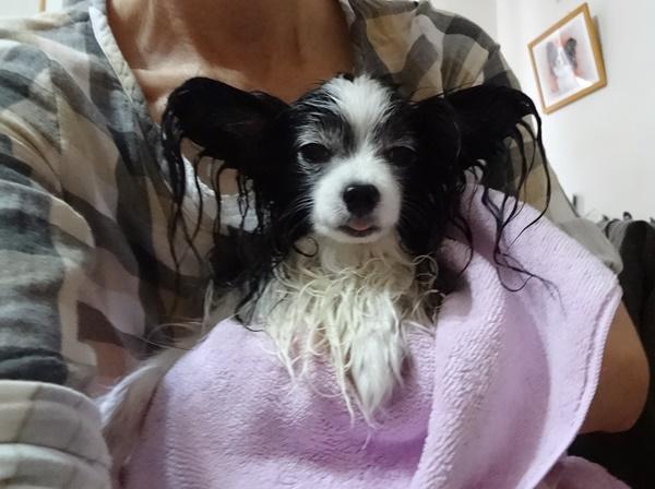 お風呂上がり