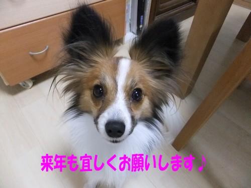 6_20111231145446.jpg