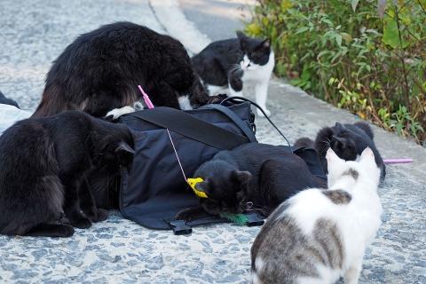 鞄の中のジャラシを漁る猫