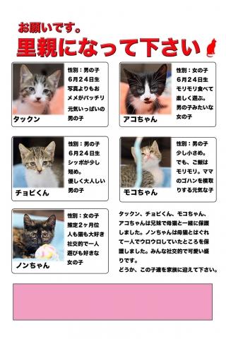 仔猫の里親を募集しています。