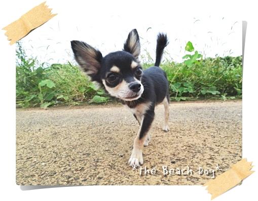 2011-09-04-11-102.jpg