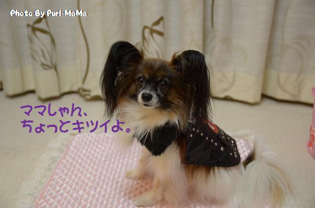 DSC_0008_20111027224617.jpg