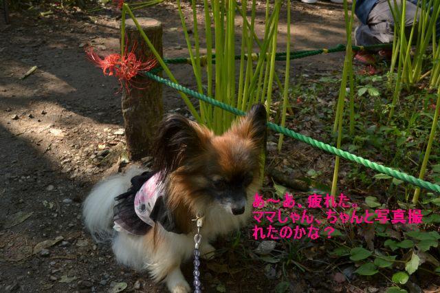 DSC_0042_20110926214558.jpg