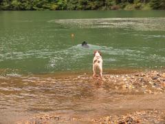 2011 09 23 ダム湖で連れを伴にレトリーブ