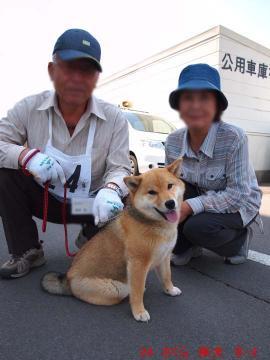 24 さくら 柴犬 ♀