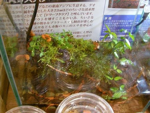 aquariumbus 2013-12-01 (62)