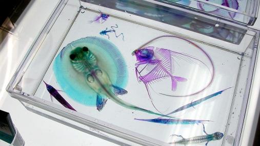 aquariumbus 2013-12-01 (49)