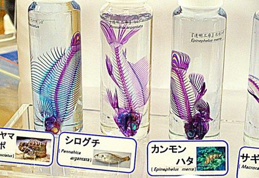 aquariumbus 2013-12-01 (48)