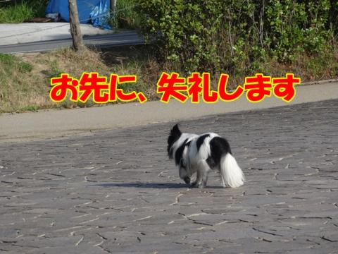 031_20130702161136.jpg