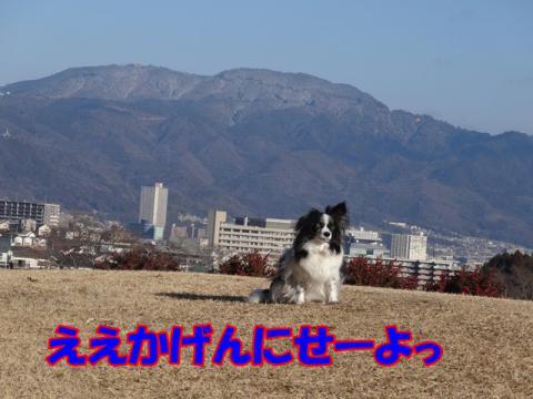 041_20130304212122.jpg