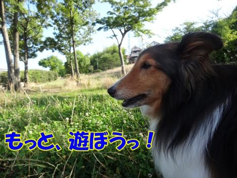 043_20130702161141.jpg