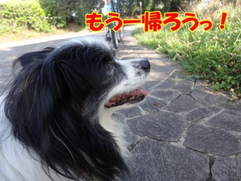 044_20130702161143.jpg