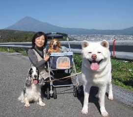 fuzitoyamaharuari.jpg