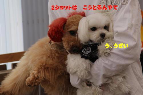 013_convert_20120426085129.jpg