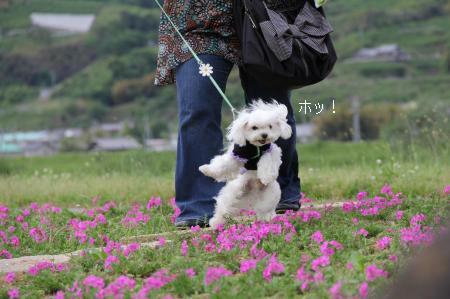 087_convert_20120504202855.jpg