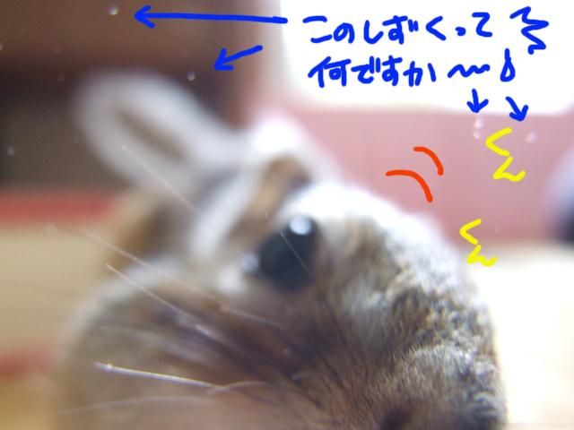 DSCF120424e0479.jpg