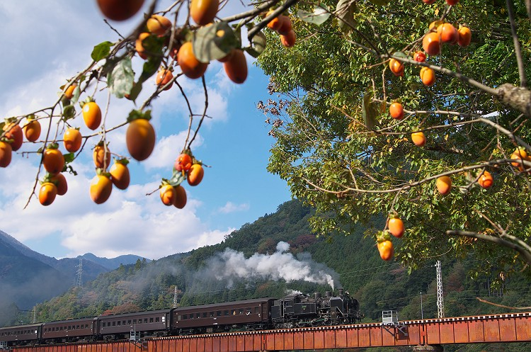 大井川鐵道の秋