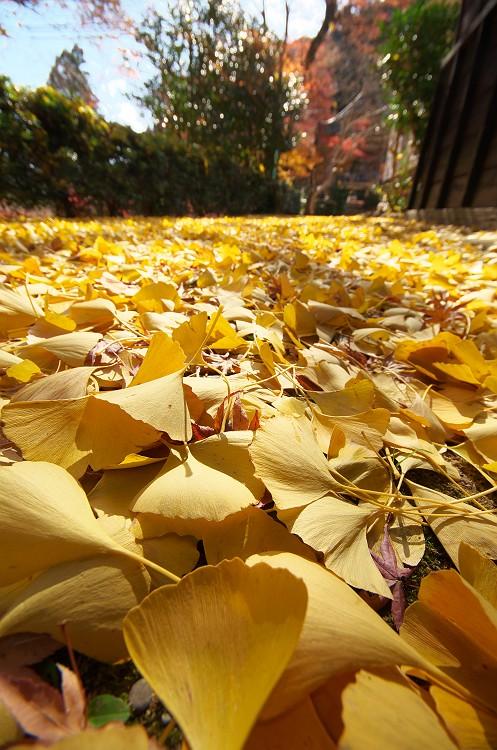 積もりゆく秋 ~晩秋の大洞院 2~