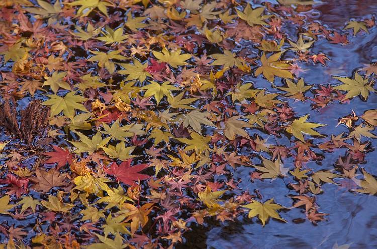 水面に積もる秋