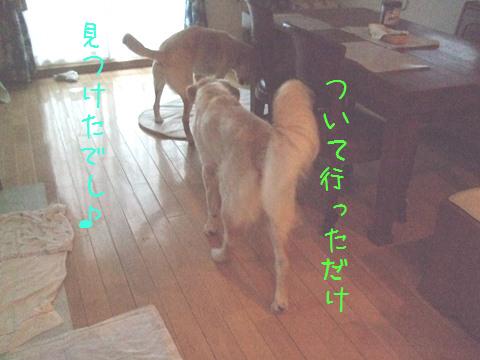 DSCF0002_20110921110311.jpg