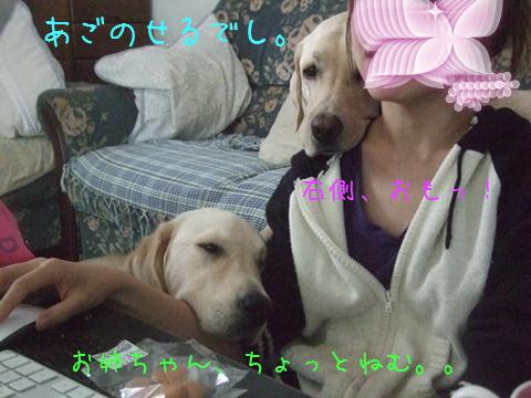 DSCF0033_20111016194813.jpg