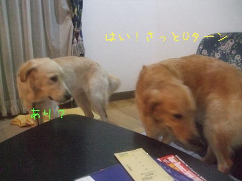 DSCF0043_20111016200059.jpg