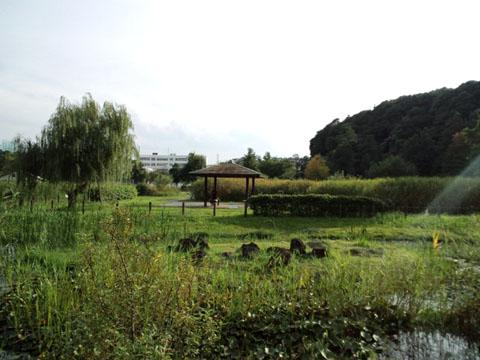 140918柏神社痲繰り (35)