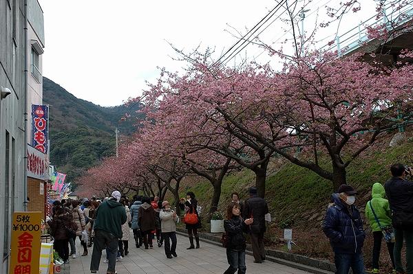 @河津桜祭り会場