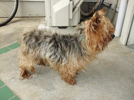 2012_0222保護犬0019