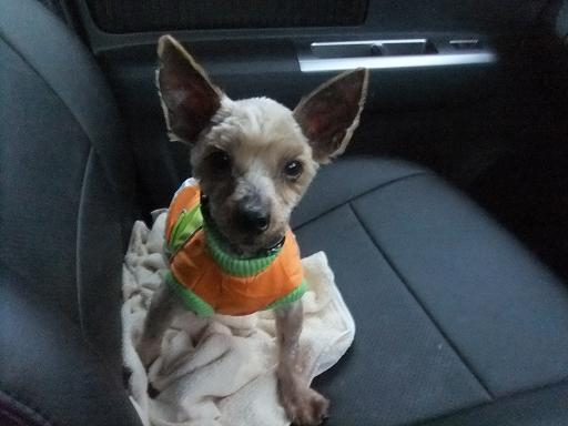 2012_0222保護犬0048