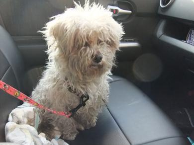 2012_0322保護犬0091