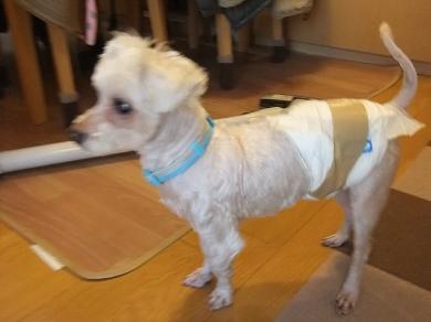 2012_0322保護犬0117