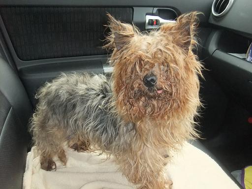2012_0222保護犬0009