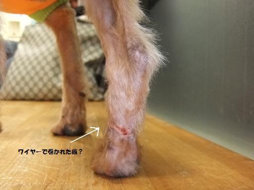 2012_0222保護犬0053