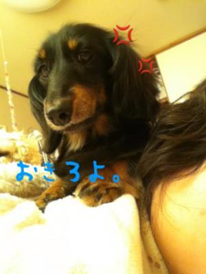 縺翫″繧阪h縲・convert_20120418095708