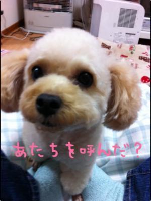 IMG_4773_convert_20120404175206.jpg