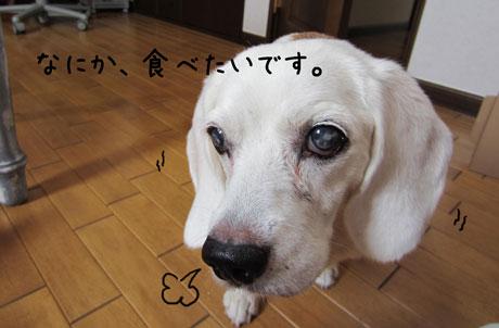 1_20110912151011.jpg