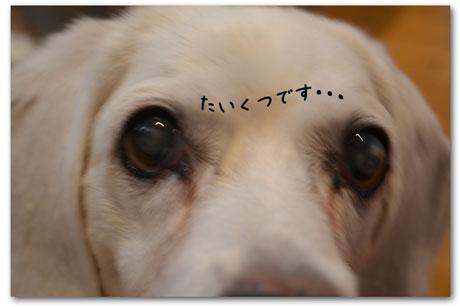 1_20110920144716.jpg