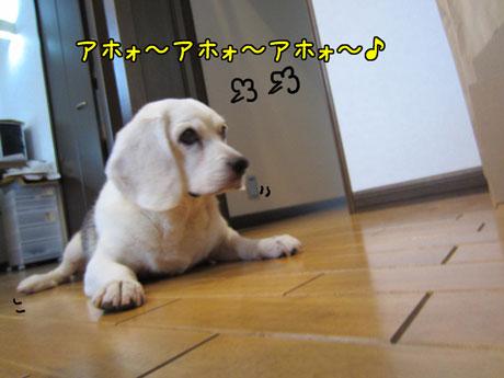 1_20110926164221.jpg